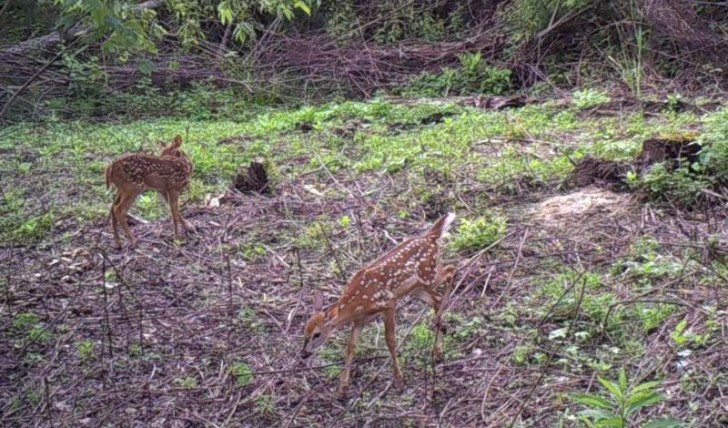 fawns-at-mineral-site